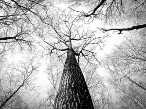 branches-238379_640